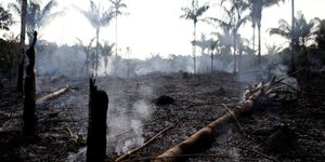 Amazonie, jungle, déforestation, incendie, Bolsonaro, fôret primaire,