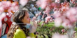 Arbre en fleurs pendant l& 39 EpidEmie de coronavirus