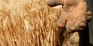Les prix alimentaires mondiaux au plus haut depuis 10 ans, selon la fao