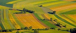 Numérique révolutionne l'agriculture
