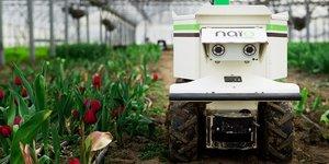 Robot désherbeur Oz, produit par Naïo technologies